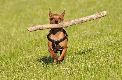 Come ritrovare un cane?