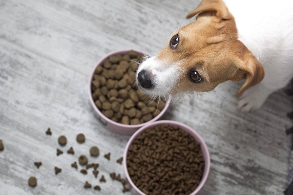 Il cibo migliore per il tuo cane: 5 passaggi da seguire